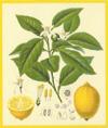 Citrus scented