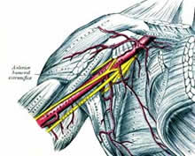 armpit nerves diagram