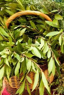 laurel leaf basket photo