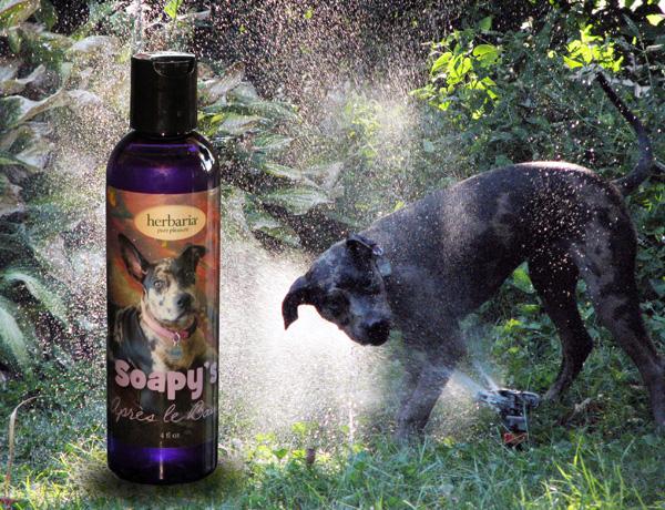 Saopy's Apres le Bain