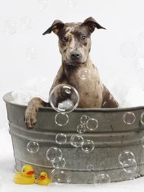 Soapy the Herbaria shop dog photo