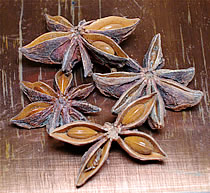 herbaria uses star anise in its all natural soaps