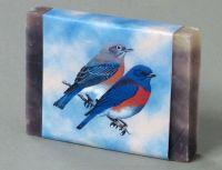 Guest: Bluebirds